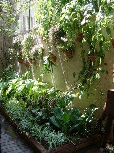 cuidado com as plantas