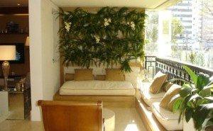 plantas que podem pegar vento e sol