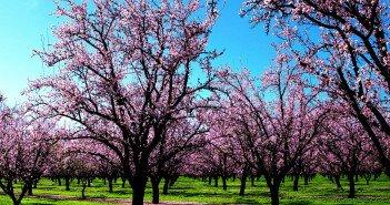 5718-spring-wallpaper-spring-nature
