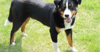 Planejando o seu Pet: como cuidar do cachorro em espaços pequenos